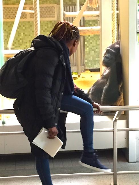 Эта горилла одна из самых взрослых в зоопарке, ей за 50