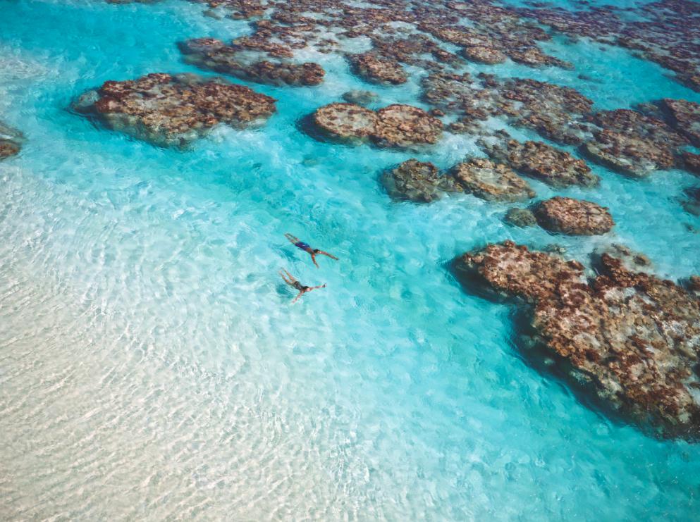 Адрес: Брандо, Французская Полинезия