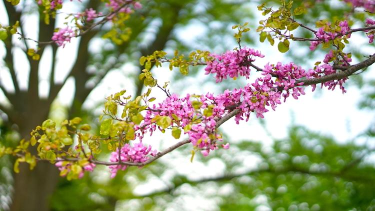 Как выглядит остров Роз: парк с оливами и соснами