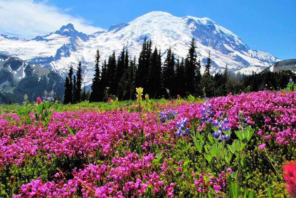 Как объехать все национальные парки Америки за один раз