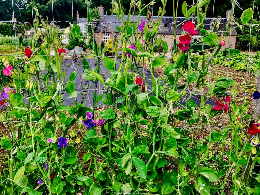 Еще сад королевы