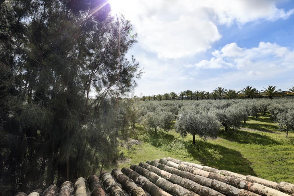 81445561-H1-AVIL_Monterosa_Olive_Oil_Orchard_01_G_A_H