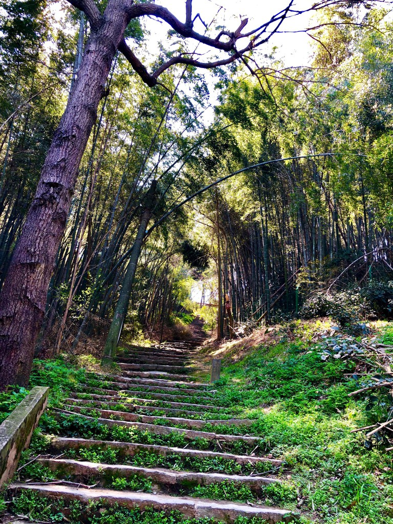 Ступени в бамбуковой роще