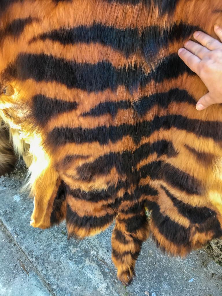 Женщина, это горный тигр, они все пушистые