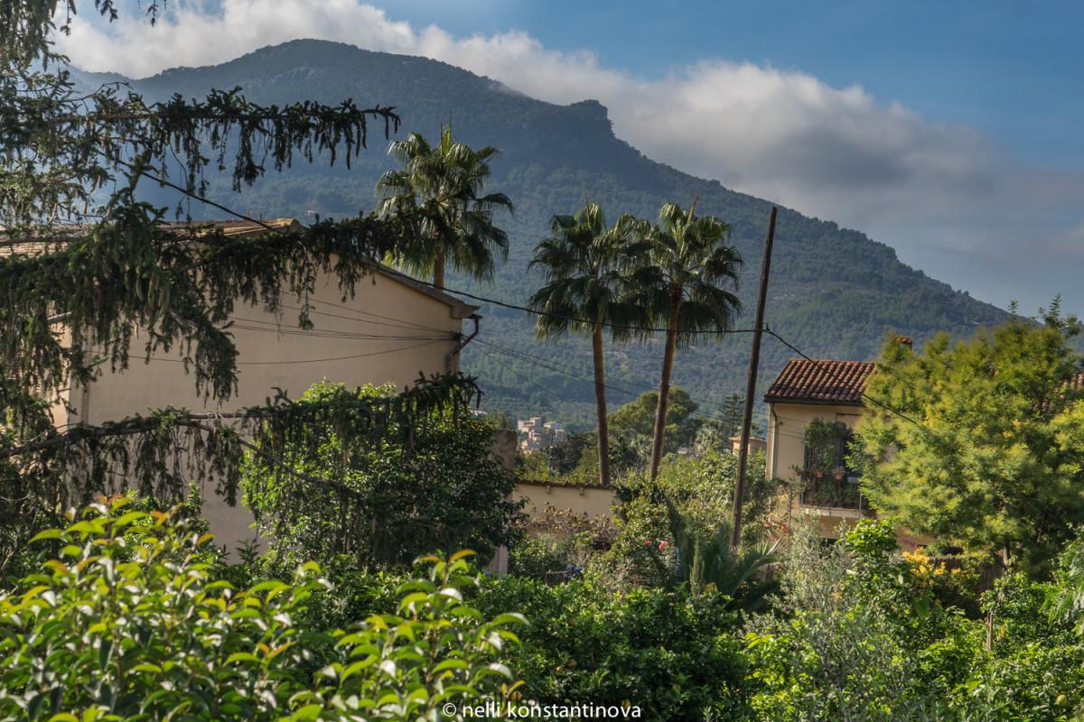 Испания, остров Майорка: садовый центр Ecovinyassa