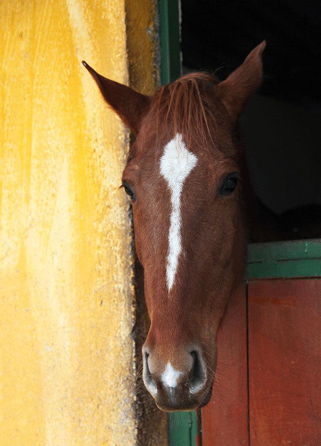 Двадцать пять лошадей ждут на ферме Farilya в получасе от моря, чтобы отвезти нас в горы