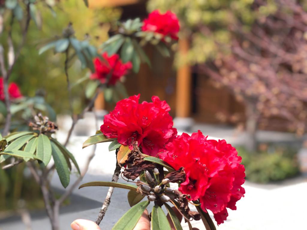 Во дворах по правилам наши-нарола должны быть растения