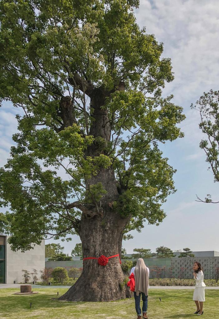 Люди под деревом, для масштаба