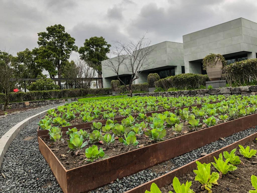 Огород отеля Amanyangyun