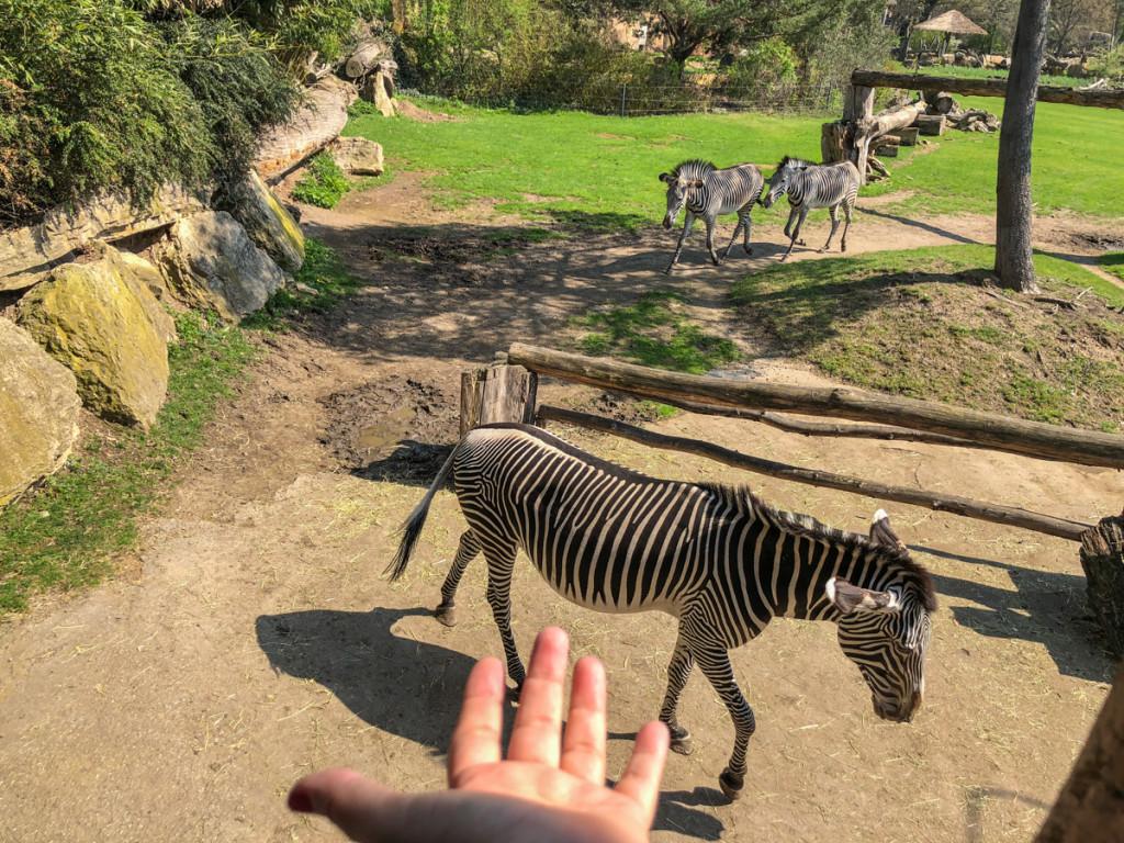 Африканская часть зоопарка