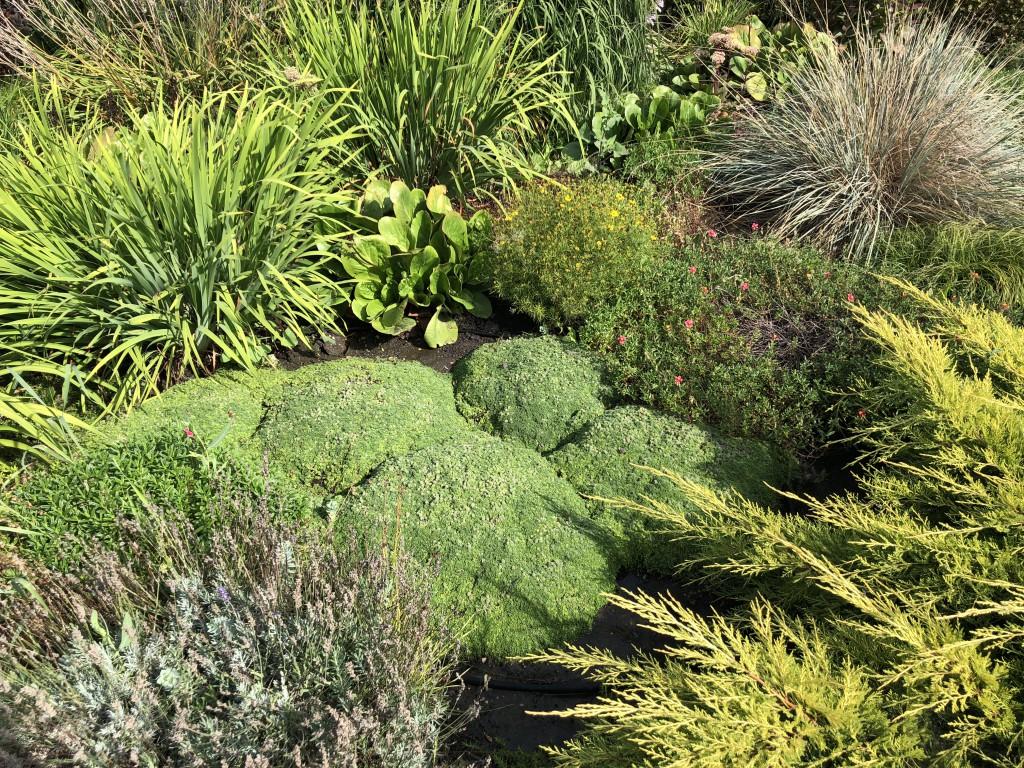 Уникальные растения в саду Дивногорского дома