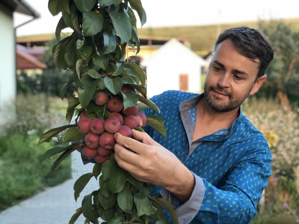 Колонновидные яблони в Дивногорье